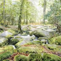 Rocky Stream – Becky Falls Dartmoor Devon – Countryside Art Gallery – Waterfall In Newton Abbot – Watercolour Painting By Woking Artist David Drury – Fine Art Prints For Sale