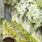 Cottage Steps – Countryside Art Gallery – Watercolour Painting By Woking Artist David Drury – Fine Art Prints For Sale