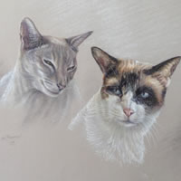 Cat Portrait Paintings by Surrey Artist Ian Henderson – Redhill