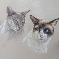 Cat Portrait Paintings by Surrey Artist Ian Henderson – Redhill