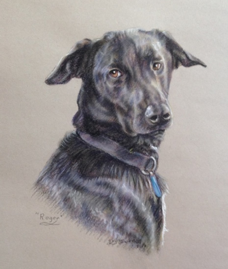 Dog Painted in Soft Pastel - Commissioned Portrait Paintings of Pets by Woking Society of Art Society member Ian Henderson - Redhill Surrey Artist
