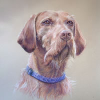 Dog – Portrait Paintings of Pets – Commissions by Woking Society of Art Society member Ian Henderson – Redhill Surrey Artist