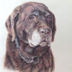 Dog Portrait Painting – Chocolate Labrador – Reigate Surrey Artist