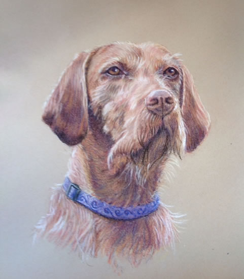 Dog - Portrait Paintings of Pets - Commissions by Woking Society of Art Society member Ian Henderson - Redhill Surrey Artist