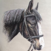 Horse Portrait Painting in Soft Pastel