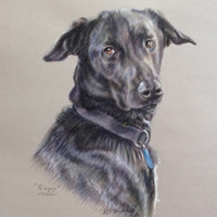 Dog Painted in Soft Pastel – Commissioned Portrait Paintings of Pets by Woking Society of Art Society member Ian Henderson – Redhill Surrey Artist