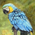 Parrot Painting – Blue and Gold Macaw – Birds Art Gallery – Surrey Artist John Bunce – Woking Society of Arts