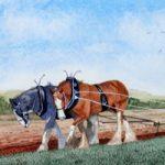 Shire Horses, Aberdeenshire – Scotland Art Gallery – Artist John Bunce – Guildford Art Society