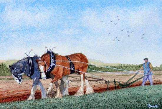 Shire Horses, Aberdeenshire - Scotland Art Gallery - Artist John Bunce - Guildford Art Society