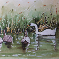 Basingstoke Canal Surrey Art – Swans
