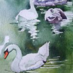 Basingstoke Canal Swans – Watercolour Art – Surrey Gallery