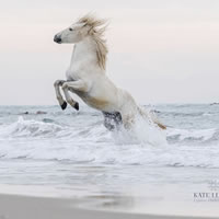Camargue Horse In The Sea – Equine Photographic Artist – Kate Lloyd – Surrey Art Gallery