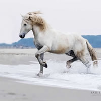 Camargue Horse Trotting In The Sea – Equine Photographic Artist – Kate Lloyd – Surrey Art Gallery