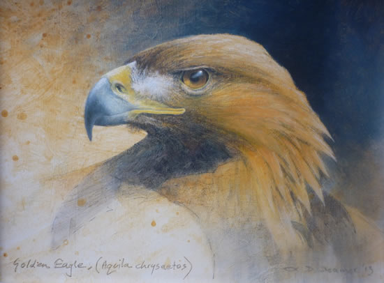 Golden Eagle - Aquila Chrysaetos - David Deamer - Artist in Oils and Pencil Portraits - Surrey Art Gallery - Pirbright Art Club - Woking Society of Arts