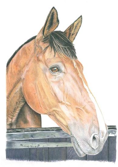 Horse Portrait - Kevin - Surrey Artist - Linda Brand UKCPS - Gallery - Pencil Artist