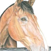 Horse Portrait – Kevin – Surrey Artist – Linda Brand UKCPS – Gallery – Pencil Artist