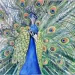 Peacock at Kew – Sarah James – Portrait Artist in Oils and Pastels – Richmond Art Society – Surrey Art Gallery
