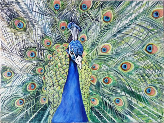 Peacock at Kew - Sarah James - Portrait Artist in Oils and Pastels - Richmond Art Society - Surrey Art Gallery