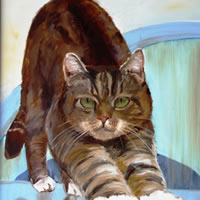 Peter Cat Portrait – Sarah James – Portrait Artist in Oils and Pastels – Richmond Art Society – Surrey Art Gallery