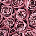 Roses – Fine Art Photography – Norfolk Artist – Debbie Monique Jolliff – Gallery