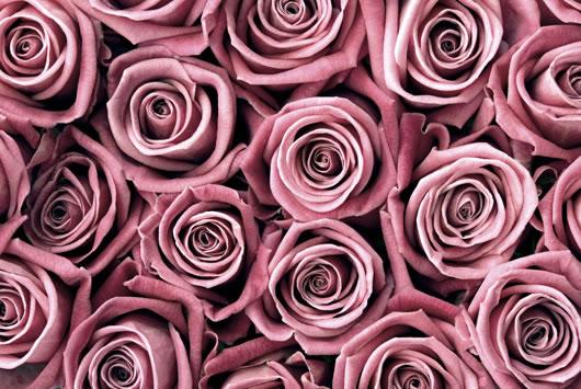 Roses - Fine Art Photography - Norfolk Artist - Debbie Monique Jolliff - Gallery