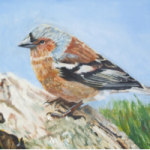 Bird – Chaffinch – Rodney Thomas Annetts – Woking Society Of Art – Surrey Artists Gallery