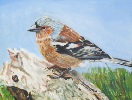 Bird - Chaffinch - Rodney Thomas Annetts - Woking Society Of Art - Surrey Artists Gallery