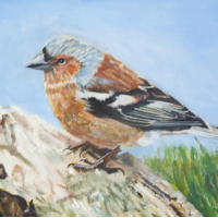 Bird – Chaffinch – Rodney Thomas Annetts – Woking Society Of Art – Surrey Artists Gallery