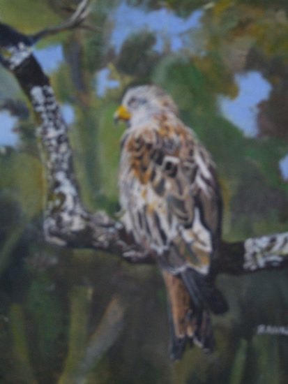 Bird - Red Kite - Rodney Thomas Annetts - Woking Society Of Arts - Surrey Artists Gallery