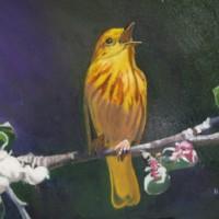 Bird – Yellow Warbler – Rodney Thomas Annetts – Woking Society Of Art – Surrey Artists Gallery