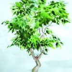 Bonsai Tree – Still Life – Nerissa Davies – Puttenham Artist Painting in Watercolours – Surrey Art Gallery
