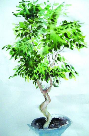 Bonsai Tree - Still Life - Nerissa Davies - Puttenham Artist Painting in Watercolours - Surrey Art Gallery