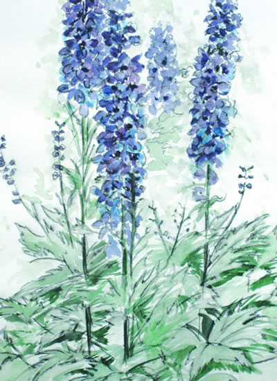 Delphiniums - Still Life - Nerissa Davies - Puttenham Artist Painting in Watercolours - Surrey Art Gallery