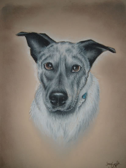 Dog Portrait - Jimmy (Commission) - Pet and Horse Portraits and Fantasy Art - Jane Disney - Frimley and Camberley Society of Arts - Surrey Art Gallery