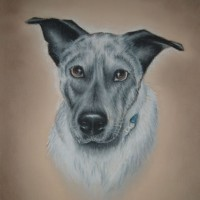 Dog Portrait – Jimmy (Commission) – Pet and Horse Portraits and Fantasy Art – Jane Disney – Frimley and Camberley Society of Arts – Surrey Art Gallery