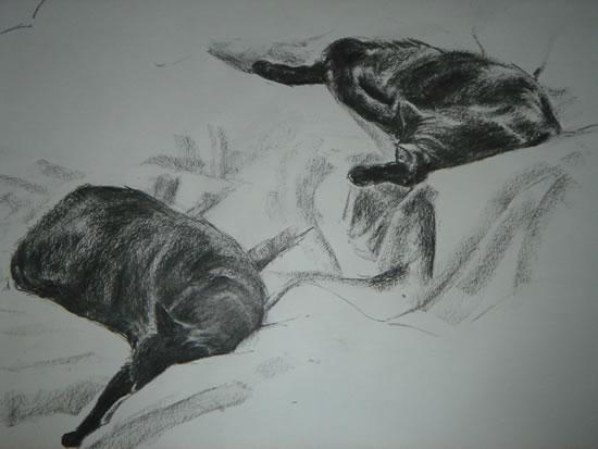 Ellie - Cat Studies - Paintings and Drawings in various Media - Vanessa Kennedy - Surrey Artist - Surrey Art Gallery
