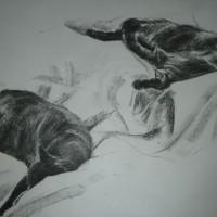 Ellie – Cat Studies – Paintings and Drawings in various Media – Vanessa Kennedy – Surrey Artist – Surrey Art Gallery