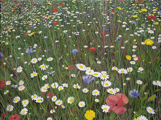 Flower Meadow - inspired by Wisley Gardens - Sicilian Artist Teresa Scannella - Surrey Artists Gallery - White Rose Art Group Woking
