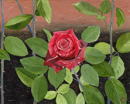 Flower - The Rose - Sicilian Artist Teresa Scannella - Surrey Artists Gallery - White Rose Art Group Woking