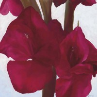 Flowers – Deep Red Gladioli – John Dumigan – Oils, Pastels and other Media – Contemporary Art, Landscapes and Abstract – Surrey Artists Gallery