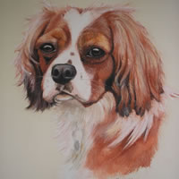 Pet Portraits in Pencil, Charcoal and Pastels – Dog – Honey – Cavalier King Charles Spaniel