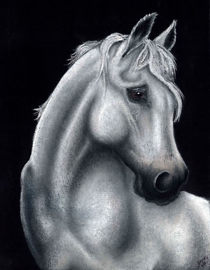 Horse Portrait - Dreamer - People, Pet and Horse Portraits and Fantasy Art - Jane Disney - Frimley and Camberley Society of Arts - Surrey Art Gallery