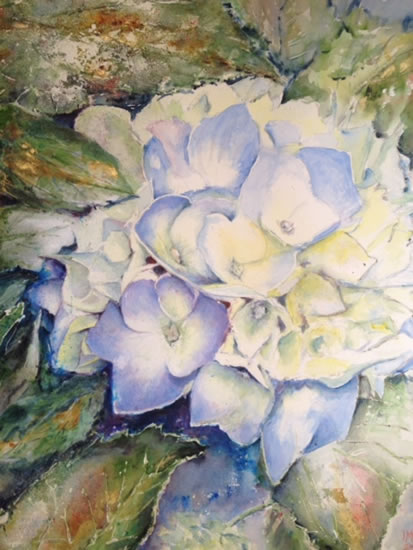 Hydrangea Flower - Surrey Artist Ingrid Skoglund - Guildford Art Society, Village Artists, Pirbright Art Club, Normandy Artists and West Surrey Artists