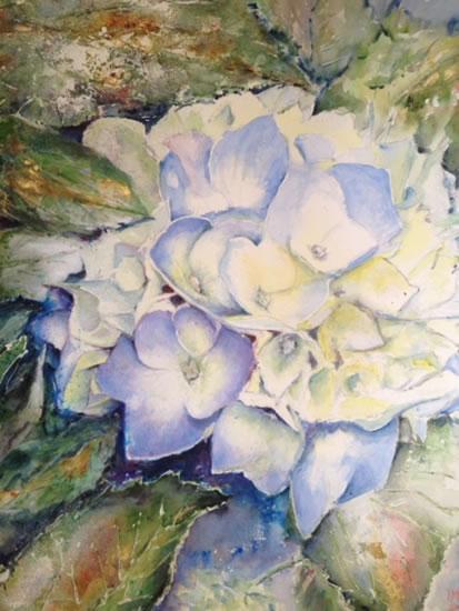 Hydrangea Flower - Surrey Artist Ingrid Skoglund - Guildford Art Society, Village Artists, Pirbright Art Club, Normandy Artists and West Surrey Artists