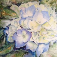 Hydrangea Flower – Surrey Artist Ingrid Skoglund – Guildford Art Society, Village Artists, Pirbright Art Club, Normandy Artists and West Surrey Artists