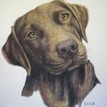 Pet Portraits in Pencil, Charcoal and Pastels – Dog – Alice – Labrador – Heidi Meadows – Surrey Art Gallery