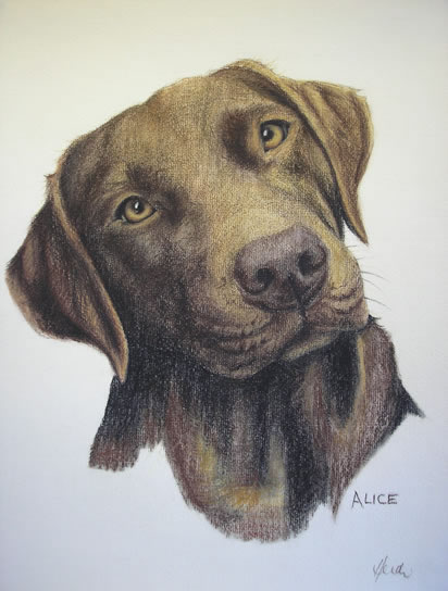 Pet Portraits in Pencil, Charcoal and Pastels - Dog - Alice - Labrador - Heidi Meadows - Surrey Art Gallery