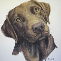 Pet Portraits in Pencil, Charcoal and Pastels – Dog – Alice – Labrador – Heidi Meadows – Surrey Art Gallery