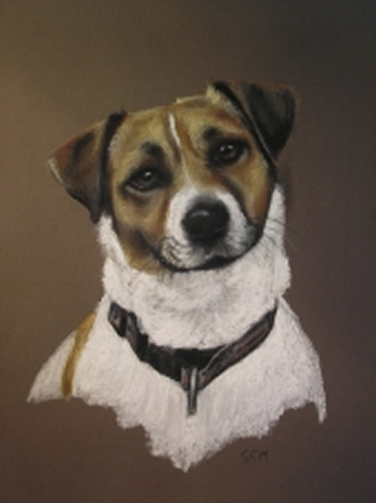 Pet Portraits in Pencil, Charcoal and Pastels - Dog - Gem - Heidi Meadows - Portrait Artist - Surrey Art Gallery