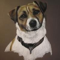 Pet Portraits in Pencil, Charcoal and Pastels – Dog – Gem – Heidi Meadows – Portrait Artist – Surrey Art Gallery